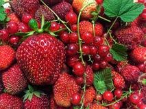Soczyste czerwone jagody truskawkowe i porzeczkowe Zdjęcia Royalty Free