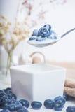Soczyste i świeże czarne jagody na łyżce z jogurtem Obrazy Stock