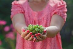 Soczyste jagody agrest w małym pucharze w żeńskich rękach Obrazy Royalty Free