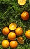 soczyste pomarańcze na zieleni, zdjęcia stock