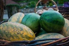 Soczystego i dojrzałego lata wielkie jagody owoc i Arbuzy są zieleni i melony są żółci w stosie na na wolnym powietrzu Obraz Stock