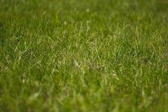 Soczysty i jaskrawy - zielona trawa z bliska Zielonej trawy t?o Tekstura trawa zdjęcia stock