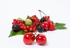 Soczysty jagodowy żniwo Zdjęcie Royalty Free