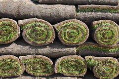 Sod Background. Green Grass roll of Sod Background royalty free stock image