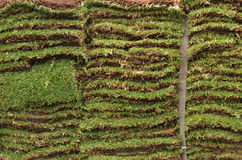 Sod Garden Grass Lawn Squares. Sod for new garden grass lawn squares Stock Photos