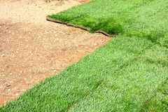 Sod grass field. Green sod grass and brown earth Background stock photo