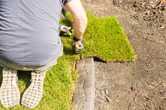 Sod installation - trimming Stock Image