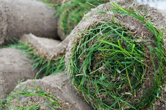 Sod Roll. Grass Lawn - Turfs ready to be rolled. sod cover.Sod Roll Royalty Free Stock Photography