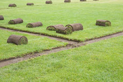 Sod rolls on a grass field. Several rolls of grass sod removed for under ground sprinkler installation royalty free stock image