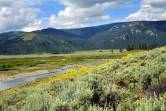 Soda Butte Creek Royalty Free Stock Images