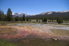 Soda Springs, Yosemite NP Royalty Free Stock Photo