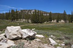 Soda Springs, Yosemite NP Royalty Free Stock Image