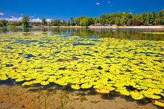 Soderica lake green landscape and water lilys view Stock Photography