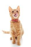 słodka imbirowa kotku Fotografia Royalty Free