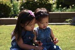 Soeurs d'enfant en bas âge jouant avec des fleurs dehors Photo stock