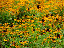 Soeurs de fleur photos libres de droits