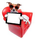 Sofà del cane Fotografie Stock Libere da Diritti