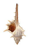 Sofá de los crustáceos del mar aislado en blanco Fotos de archivo libres de regalías