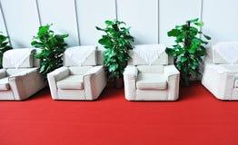 Sofá e plantas verdes Foto de Stock