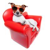 Sofá del perro Imagen de archivo libre de regalías