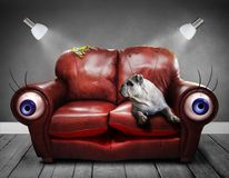Sofa, Couch, Surreal, Eyes, Dog Royalty Free Stock Photography