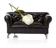 Sofa, couch with white rose Stock Image