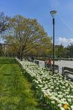 SOFIA, ΒΟΥΛΓΑΡΙΑ - 14 ΑΠΡΙΛΊΟΥ 2018: Λουλούδια στο πάρκο μπροστά από το εθνικό παλάτι του πολιτισμού στη Sofia Στοκ εικόνες με δικαίωμα ελεύθερης χρήσης