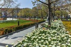 SOFIA, ΒΟΥΛΓΑΡΙΑ - 14 ΑΠΡΙΛΊΟΥ 2018: Λουλούδια στο πάρκο μπροστά από το εθνικό παλάτι του πολιτισμού στη Sofia Στοκ Φωτογραφία