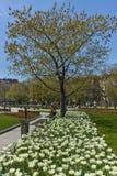 SOFIA, ΒΟΥΛΓΑΡΙΑ - 14 ΑΠΡΙΛΊΟΥ 2018: Λουλούδια στο πάρκο μπροστά από το εθνικό παλάτι του πολιτισμού στη Sofia Στοκ φωτογραφία με δικαίωμα ελεύθερης χρήσης