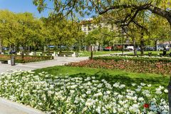 Blooming Tulips in a Spring Garden. Sofia,Bulgaria : April 2018 : Beautiful tulips in a tulip field .Spring background in Sofia city stock images