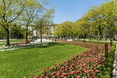 Blooming Tulips in a Spring Garden. Sofia,Bulgaria : April 2018 : Beautiful tulips in a tulip field .Spring background in Sofia city royalty free stock images