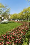 Blooming Tulips in a Spring Garden. Sofia,Bulgaria : April 2018 : Beautiful tulips in a tulip field .Spring background in Sofia city stock photo