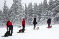 Red Cross rescuers with dogs. Sofia, Bulgaria - January 18, 2017: Rescuers from Mountain rescue service at Red Cross organization participate in a training with Royalty Free Stock Images