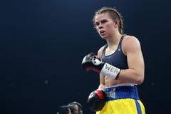 Boxer Savannah Marshall royalty free stock image