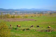 Sofia field,Bulgaria Royalty Free Stock Photo