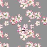 Sofistikerade härliga gulliga älskvärda mjuka växt- blom- vårblommor av äpplet med gräsplansidamodellen på beige bakgrund stock illustrationer