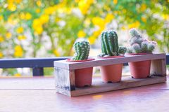 Free Soft And Selective Focus, Shaped Cactus With Thorns On Blur Background,Cactus Bloom Little Cute Bright Flower In Pot Royalty Free Stock Photo - 155836635