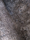 Soft animal fur background Stock Photography