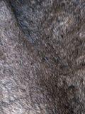Soft animal fur background Stock Photography