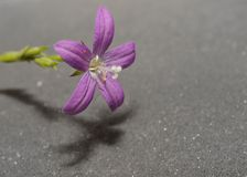Soft as Sand. Purple Flower over the sand Stock Image