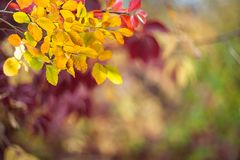Soft autumn background with leaves Stock Photography