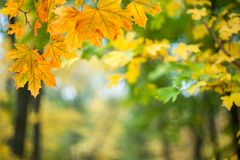 Soft autumn background with leaves. Soft autumn background with bright leaves, nature wallpaper, selective foucs Stock Photography