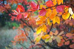 Soft autumn background with leaves. Soft autumn background with bright leaves, nature wallpaper, selective foucs Stock Photos