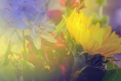 Soft background of purpe and yellow flowers featuring sunflower - Room for Copy royalty free stock photo