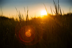 Soft backlight meadow grass during sunset Stock Photo