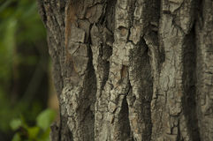 Soft bark. A nice texture of soft and warm bark Royalty Free Stock Photos