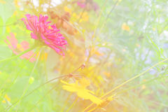 Soft blur abstract background with of cosmos flowers in the garden. Pastel color tone Royalty Free Stock Images