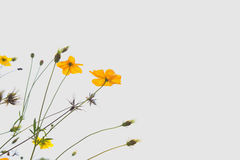 Soft blur abstract background with of cosmos flowers in the garden. Pastel color tone Stock Photos