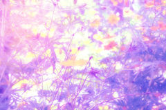 Soft blur abstract background with of cosmos flowers in the garden. Pastel color tone Royalty Free Stock Photography