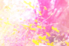 Soft blur abstract background with of cosmos flowers in the garden. Pastel color tone Royalty Free Stock Photos